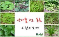 사진으로 보는 산나물 종류와 독초 구별법 http://i.wik.im/168505