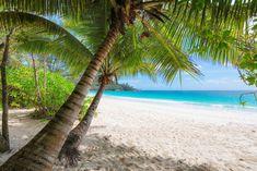 Pochylone, Palmy, Plaża, Morze