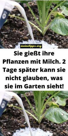 Garden Paths, Garden Landscaping, Air Plants, Garden Planning, Diy Crafts To Sell, Garden Inspiration, Vegetable Garden, Agriculture, Good To Know