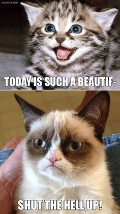 A girl I work with says this is me and her, Haha!  I'm happy cat of course!