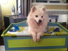DIY Doggy Bench Bed With Storage space