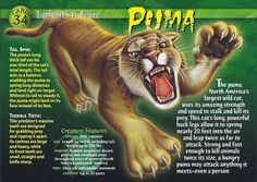 Name: Puma Category: Nightmares of Nature Card Number: 34 Front: Puma Nightmares of Nature Card 34 front Back: Puma Nightmares of Nature Card 34 back Trading Card: Baby Wolverine, Monster Book Of Monsters, Interesting Animals, Wild Creatures, Animal Species, Animal Facts, Wtf Fun Facts, Mythological Creatures, Mundo Animal