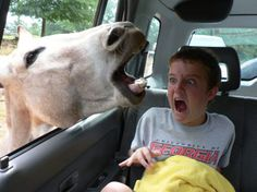 This has got to be one of the funniest photos I have ever seen in my life! It's one that makes me chuckle every time I see it! (I can only imagine what this boy is thinking with that head coming through the open window, with it's mouth wide open!)