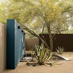 10 Ideas To Steal From Desert Gardens - Gardenista In A Paradise Valley . 10 ideas for stealing from desert gardens – Gardenista In a subdivision in the Paradise Valley was used muc Desert Landscaping Backyard, Modern Backyard, Modern Landscaping, Landscaping Plants, Desert Gardening, Arizona Gardening, Landscaping Ideas, Backyard Ideas, Dry Garden
