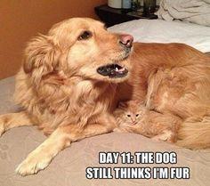 Funny Animals (20 Pics)