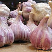 Chesnok Red GarlicOrganic
