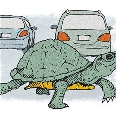 Random Acts of Kindness: Women both helped to save turtle in road