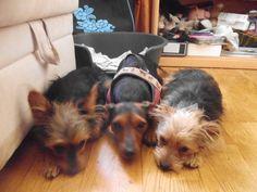 Hunde Foto: jennifer und cleo und choco - die geschwisternliebe Hier Dein Bild hochladen: http://ichliebehunde.com/hund-des-tages  #hund #hunde #hundebild #hundebilder #dog #dogs #dogfun  #dogpic #dogpictures