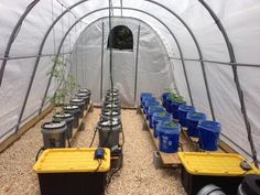 Veggies growing in the ShelterLogic GrowIT Heavy-Duty Round Greenhouses