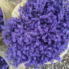 Lavender By The Bay - Farm Stand