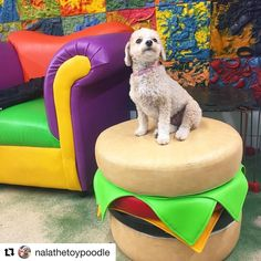 #Repost @nalathetoypoodle  Hanging out at @smwmiami!