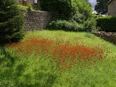 Google Image Result for http://upload.wikimedia.org/wikipedia/commons/5/51/Fox-and-cubs_-_geograph.org.uk_-_492938.jpg