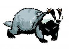badger illustrations - Google Search