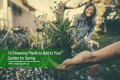 Spring is the best time to add new plant species to your garden. After preparing your garden by setting up the best irrigation system, you can choose from a long list of spring flowers that can beautify your space. Plant Species, Irrigation, Free Photos, Spring Flowers, Planting Flowers, Ads, Space, Lighting, Garden