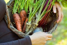 Store Your Summer Harvest in a DIY Backyard Root Cellar, built from conventional upcycled materials. Food Substitutions, Root Cellar, Growing Veggies, Root Vegetables, Fruit Garden, How To Eat Paleo, Canning Recipes, Korn, Green Building