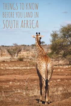Is a vacation in South Africa in your future? Read here for all the tips and things to know about visiting.