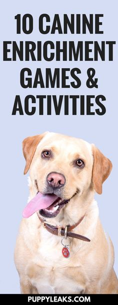 Looking for some games and activities to keep your dog busy? These canine enrichment games & activities will give your dog plenty of mental stimulation, they'll keep your dog entertained, and they'll make your dog happy by giving them something e via @KaufmannsPuppy