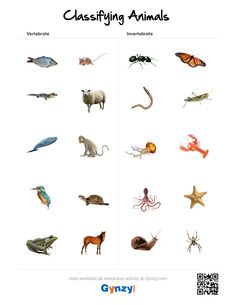 Pin by Teacher Timo on Classifying Animals Classifying Animals, Smart Board Lessons, Interactive Whiteboard, Vertebrates, Science, Activities, How To Plan, Education, Homeschooling