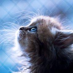 #Cats  #Cat  #Kittens  #Kitten  #Kitty  #Pets  #Pet  #Meow  #Moe  #CuteCats  #CuteCat #CuteKittens #CuteKitten #MeowMoe      Cuteness is my middle name ...   http://www.meowmoe.com/94366/