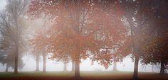 Fog at Hoornse plas - null