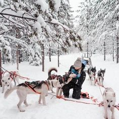 The Complete Lapland, Finland Travel Guide - Find Us Lost Lappland, Helsinki, Selena Taylor, Finland Travel, Finland Trip, Lapland Finland, Alaska, See The Northern Lights, Wanderlust