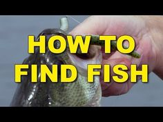 largemouth bass fly fishing tips Bass Fishing Tips, Fishing Videos, Fishing Knots, Best Fishing, Ice Fishing, Trout Fishing, Saltwater Fishing, Kayak Fishing, Fishing Tackle