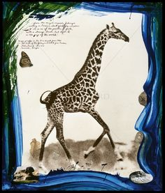 photos by Peter Beard : everyday_i_show — LiveJournal Peter Beard, Beard Art, Out Of Africa, Sketchbook Inspiration, Great Photographers, African Animals, American Artists, Art Photography, Moose Art
