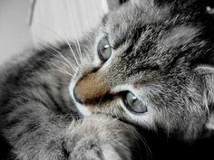 Mila; so sweet. Cat. Kitten. Poes