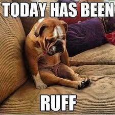 Image result for british bulldog memes