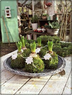 try this with one of the hyacinth bulbs I'll force into bloom in January Indoor Garden, Indoor Plants, Outdoor Gardens, Christmas Inspiration, Garden Inspiration, Flower Decorations, Christmas Decorations, Deco Floral, Floral Foam