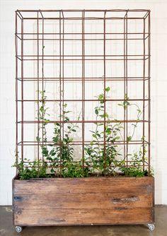 Spaljévägg i planteringslåda med hjul