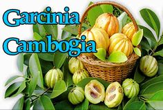 Healthy Choice Garcinia Cambogia Helps to Drop Your Ponds Yoga For Weight Loss, Easy Weight Loss, Losing Weight Quotes, Belly Fat Diet, Weight Loss Before, Losing 10 Pounds, Diet Plans To Lose Weight, Weight Loss Supplements, Nutrition Tips