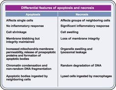 Apoptosis and necrosis