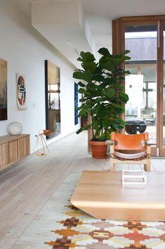 Grote plant in de woonkamer