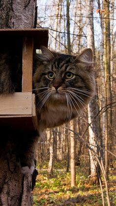 cat_bird-house_sit_funny_tree_forest_furry
