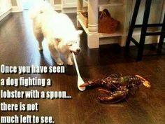 Dog fights lobster
