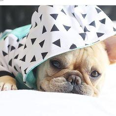 dog イヌ 犬可愛い画像まとめ http://ift.tt/1V6qQDt