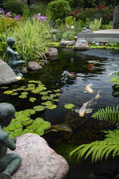 Fish Pond Gardens, Koi Fish Pond, Water Gardens, Lily Garden, Garden Pond, Pond Landscaping, Ponds Backyard, Pond Plants, Aquatic Plants