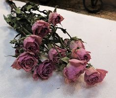This bunch of fresh cut and dried gorgeous pink spray roses is perfect for your floral needs. Approximately 15 inches in length with roses. Roses are approximately 1 inches in length and - 1 inches in diameter. These roses dried beautifully! Drying Roses, Spray Roses, Still Life, Floral Wreath, Wreaths, Pink, Beautiful, Flower Crowns, Door Wreaths