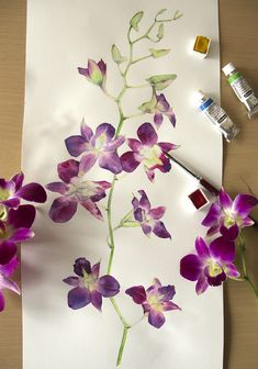 Watercolor illustration of Orchid