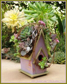~I really listen to what you have to say...several requests for succulent rooftop birdhouses in 'Purple.' For those that are fans of all shades of purple, green and orange accents, you'll be able to order a 'purple birdhouse' starting April 1st from the 2013 Spring & Summer eBrochure~ Cindy pinned with Pinvolve - pinvolve.co