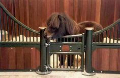 Mini stall for a mini horse.  This would be perfect for my little guys.
