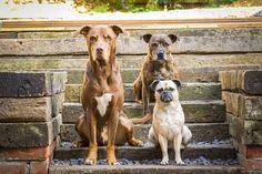 Wyróżnienie w kategorii ''Psy do adopcji'' |