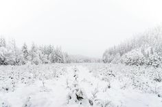 Fading into winter Norway, Snow, Winter, Pictures, Outdoor, Winter Time, Photos, Outdoors, Outdoor Games