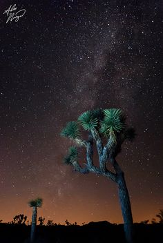 Milky Way over Joshua Tree National Park, California