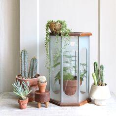 Large Vintage Etched Glass Geometric Terrarium. $125.00, via Etsy.