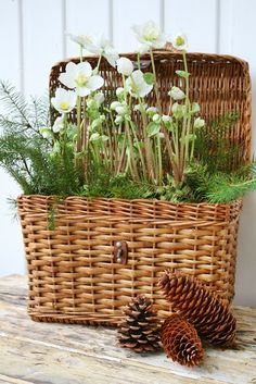 VIBEKE DESIGN - I have so many baskets in the storage room. I need to remember to get them out and plant them.place them around the house, patio, sunroom. It looks so fresh and inviting. Old Baskets, Wicker Baskets, Wicker Planter, Flower Basket, Flower Pots, Deco Champetre, Vibeke Design, Deco Floral, Garden Inspiration