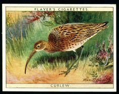 Players, Game Birds & Wild Fowl 1928. No2 Curlew.