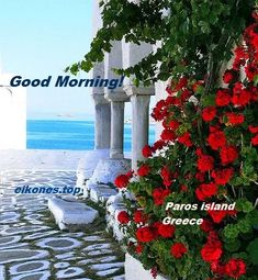 Good Morning from Greece!Good Morning from Greece! Paros Greece, Paros Island, Good Morning, Summer, Top, Image, Beautiful, Buen Dia, Summer Time