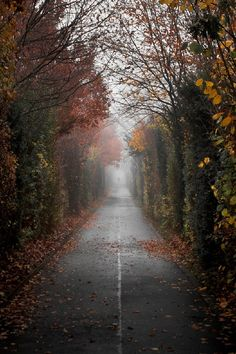 Geneva apres la pluie